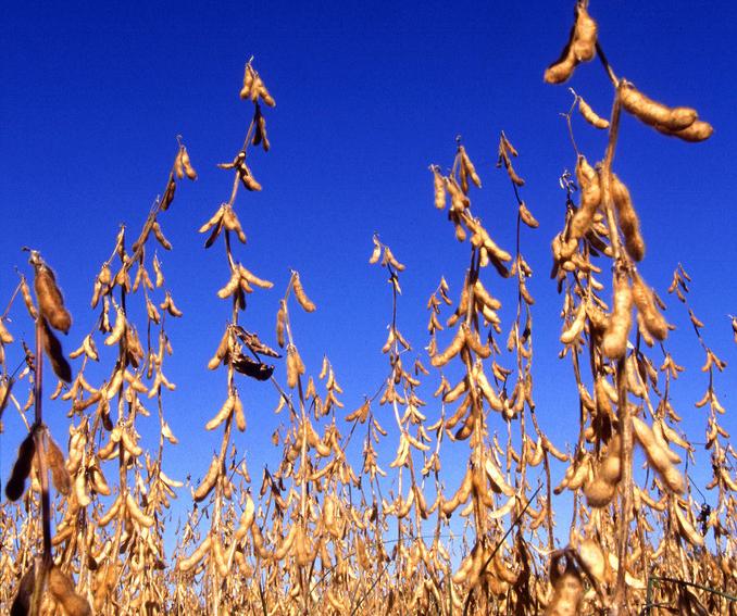 11月1日全国豆粕价格行情表,江西豆粕价格每吨下跌92元跌幅最大
