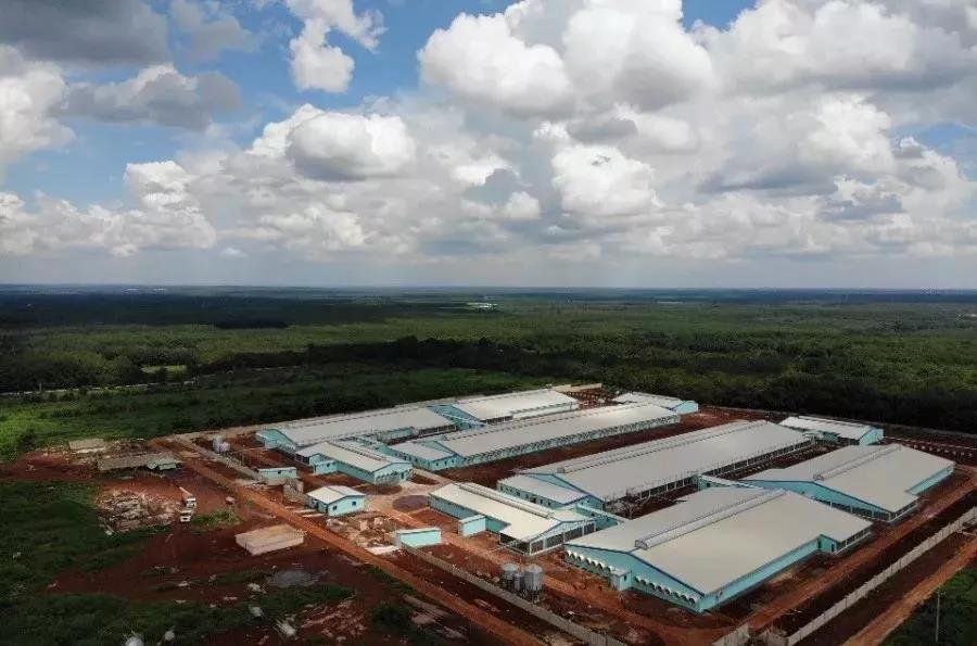 海外养猪扩容 新希望六和拟向越南三家猪场追加投资5.1亿元