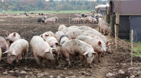 广东允许生猪养殖用地使用一般耕地