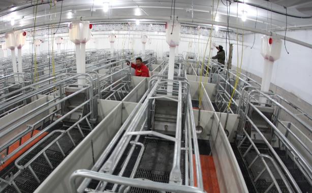 辽宁省生猪存栏从7月份开始较快增长 能繁母猪降幅收窄