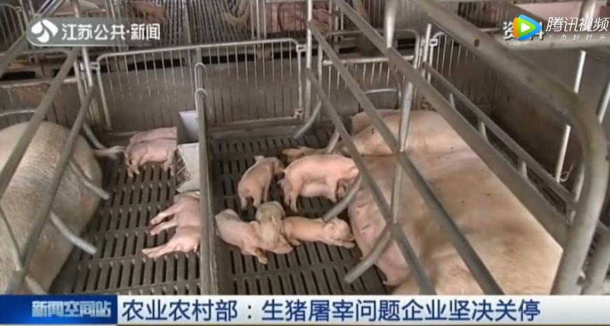 农业农村部:生猪屠宰问题企业坚决关停
