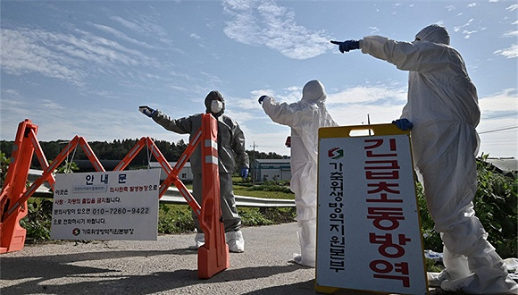 韩国民官军5日起再进行联合捕猎野猪 将使用枪支