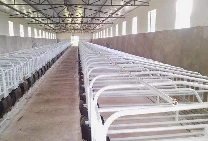 全进全出控制猪场疫病,阻断非洲猪瘟传播途径