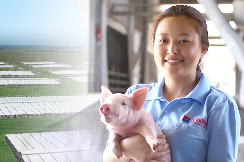 继续落实养大猪策略 正邦科技10月份生猪销量锐减近四成