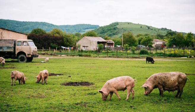 生猪生产进入止降回升转折期,中国猪肉进口源再添一国