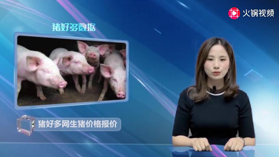 猪好多网猪价行情播报:屠企压价意向强烈,猪价能回落吗?