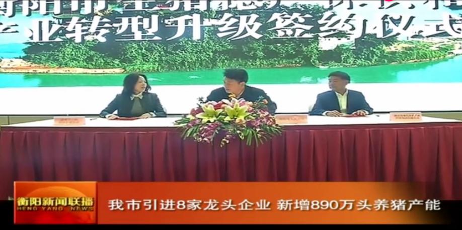 投资近155亿元!衡阳市引进8家龙头企业,新增890万头养猪产能