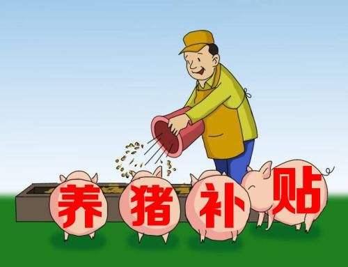 """天津:生猪养殖企业迎来政策""""礼包"""" 引进种猪每头给予1000元补贴"""