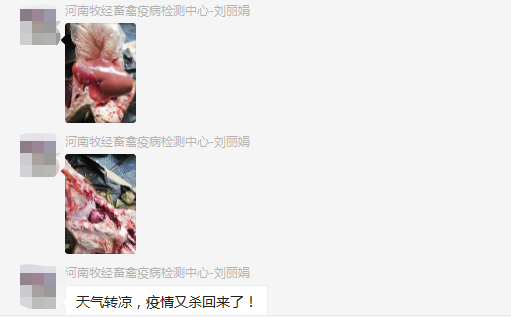 刘老师发布的病猪解剖图