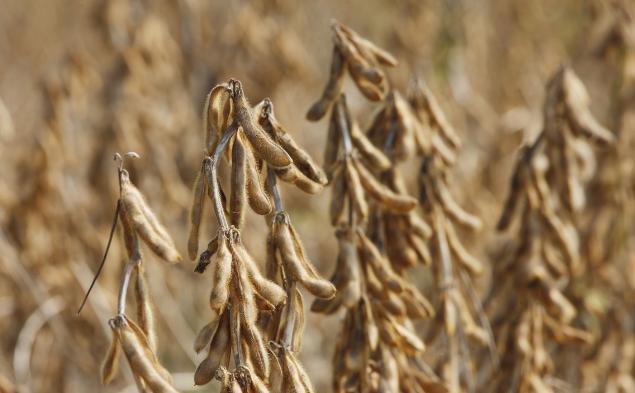 11月12日全国豆粕价格行情表,江西豆粕价格强势上涨