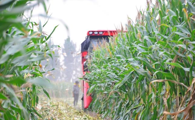 11月12日全国玉米价格行情表,饲料原料出货量回升未能拉升玉米价格