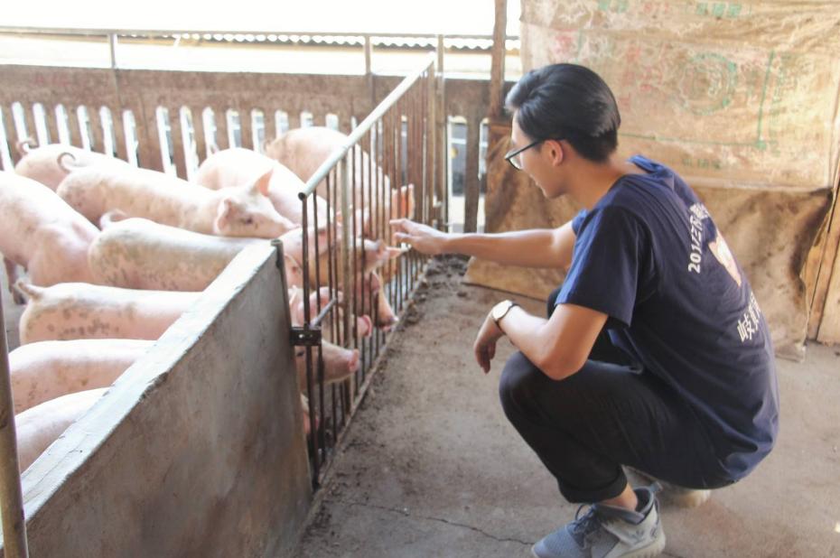 大学生返乡当猪倌 无抗时代生态养殖大有可为