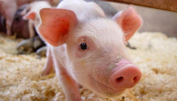 """养猪人都在期盼猪价能否再次""""逆势""""上涨?"""