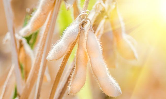 11月13日全国豆粕价格行情表,江西豆粕价格五连涨后出现暴跌