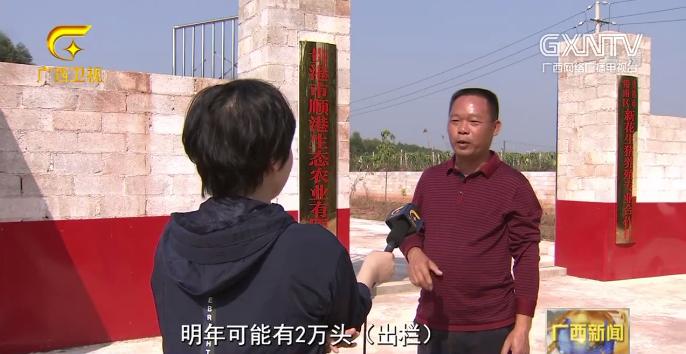 """广西:全力推进生猪复产 稳住农业""""基本盘"""""""