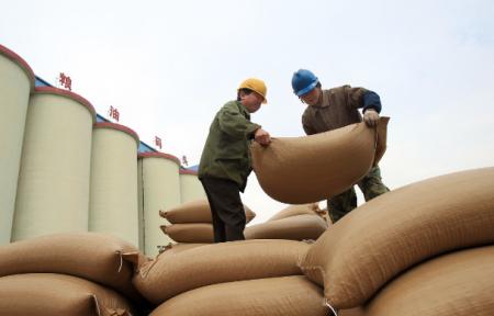11月14日全国豆粕价格行情表,贵州豆粕价格持续下降后反弹