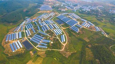 四川:隆昌明年将建成150个种养循环合作养猪场