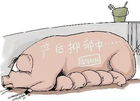 保护好你的钱袋子 治疗母猪产后三联症有技巧
