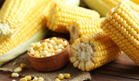 11月15日全国玉米价格行情表,国内玉米价格震荡
