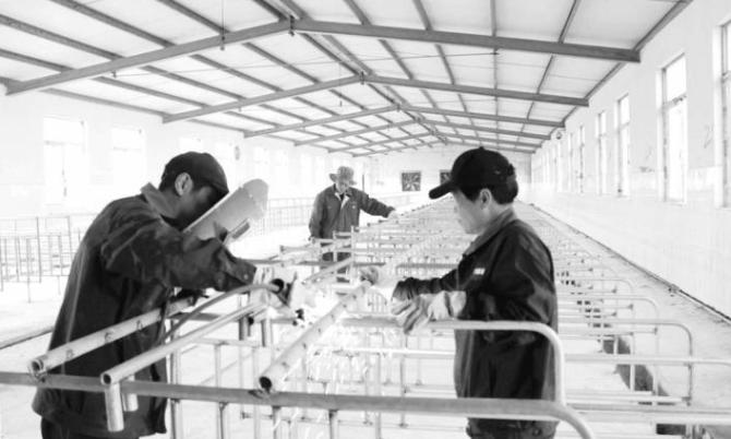 铜陵市养猪企业养殖趋势好转 加快生猪生产步伐