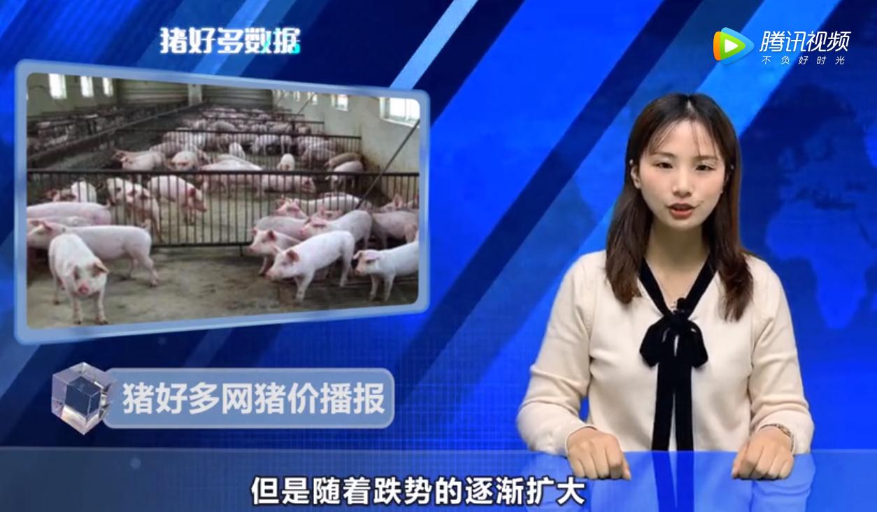 11月14日猪价行情播报:跌势未止,养殖户跟风抛售增多!
