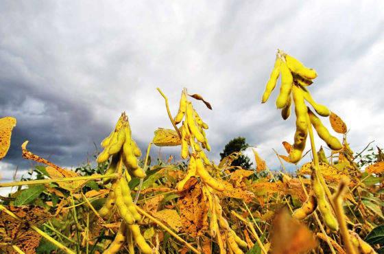 """十一月""""滑铁卢"""",我国进口大豆市场能否重返巅峰时刻?"""