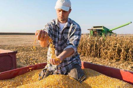 2019年10月份农产品供需形势分析 大豆价格止涨转跌