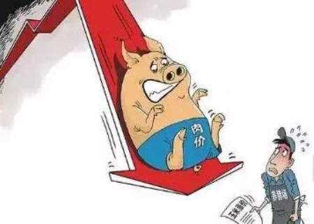 """生猪价格""""崩塌式""""下跌,2019下半年猪价还会上涨吗"""