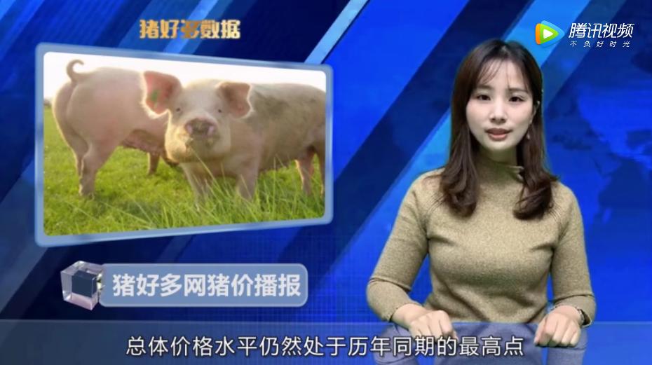 11月18日猪价行情播报:生猪供应依然不足,猪价继续保持高位!