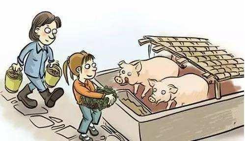 解读关于猪的三个重要的信息 谈谈对未来养猪业的几点看法