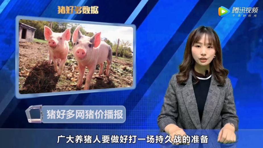 11月21日生猪价格播报:猪价大涨大跌后,养猪人还敢压栏吗?