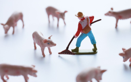 一个月内签3个养猪项目 唐人神加码生猪养殖业务