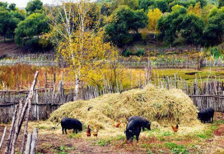 湖北猪肉保供稳价在行动 政策扶持保障生猪产能企稳回升