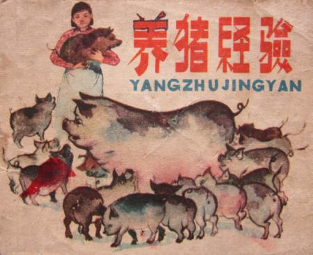 金猪时代,保育猪这么养才是赚到!