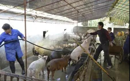 加大扶持政策,辽宁新建投资500万元以上规模猪场106个!