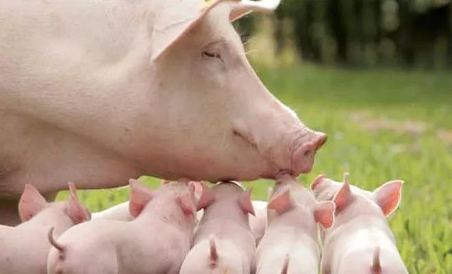 想要保供稳产,保护好养殖户积极性是关键