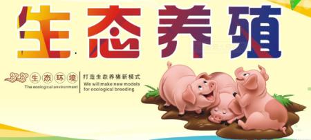 一位家庭农场主的生态养猪生意经,高品质猪肉健康美味