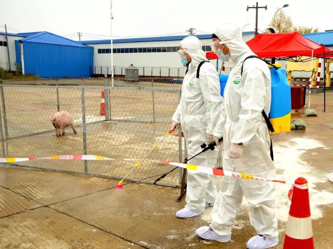 冬季更利于猪场病毒传播?冬季防非,这些才是重点!