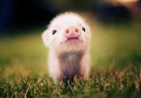 猪少的时候都不想跟你玩,猪多的时候凭啥陪你玩?
