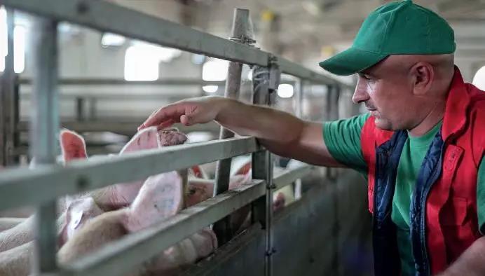 冬季新生仔猪腹泻的综合防治