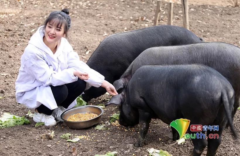 女大学生深山养千头黑猪 父亲催婚欲陪嫁300头猪