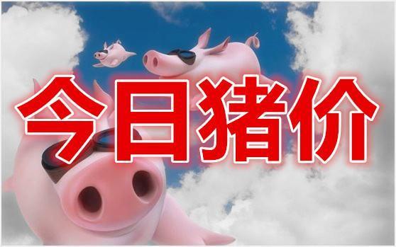 """猪价相比前期的齐声喊""""涨"""" 如今的猪市看法不一"""