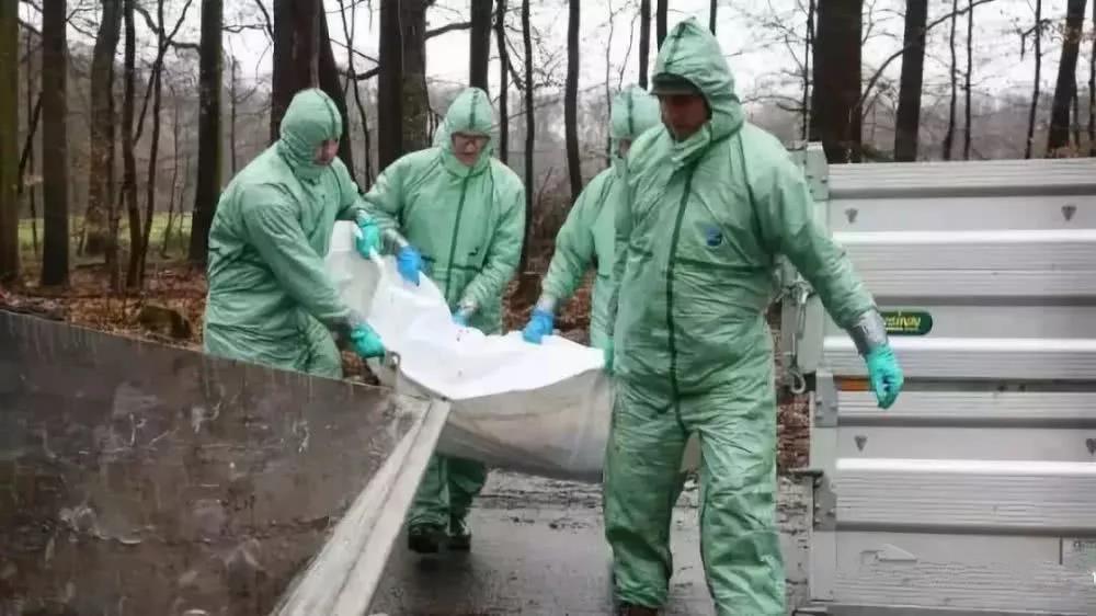 德国边境发现非洲猪瘟野猪尸体,德国境内严防死守!