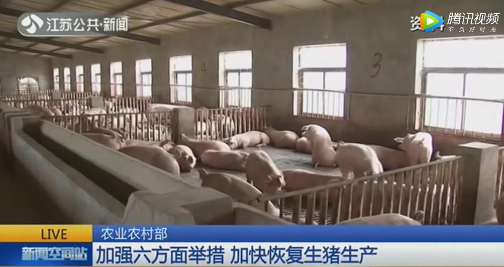 农业农村部:加强六方面举措 加快恢复生猪生产