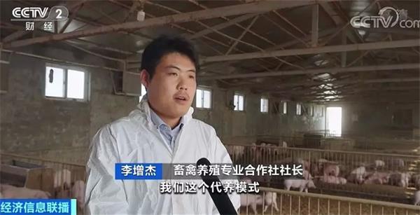 """""""云养猪""""模式来了!你买仔猪,合作社养!肉价会便宜吗?"""