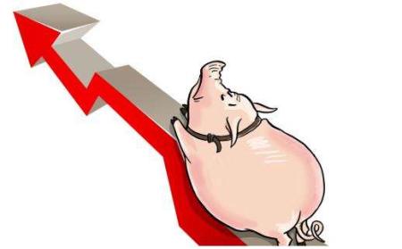 猪肉概念股震荡拉升 机构预测猪价仍有上涨动力