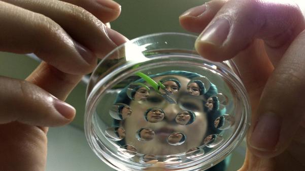 日本要在猪体内培植人类脏器:二者内脏大小最相近
