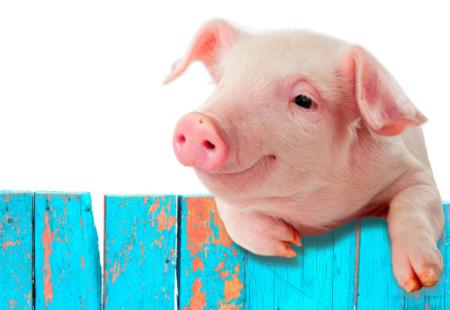 12月3日全国生猪价格土杂猪报价表,今日土杂猪价格全面上涨