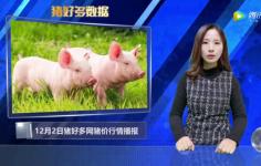 12月2日猪价播报:12月猪价齐飘红,环保该为高猪价背锅吗?