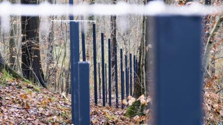 为防带非瘟病毒野猪侵害,丹麦耗资1100万欧元在边界上建围栏